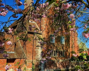 Blossom on the trees .jpg