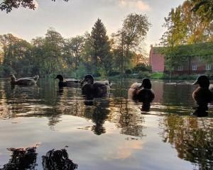 Ducks on the moat.jpg